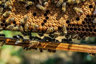 apiary-1867537_1280
