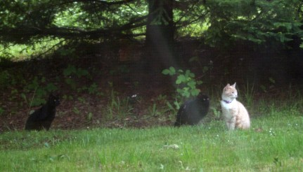 feral cats in the backyard - which one was the kitties' mama??