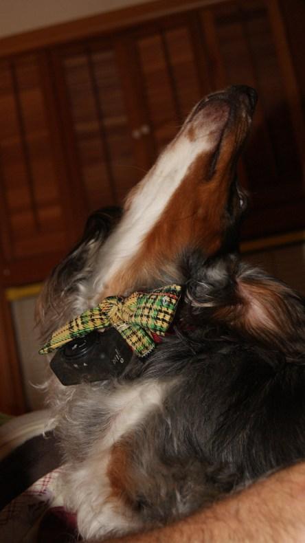 Is my tie straight?