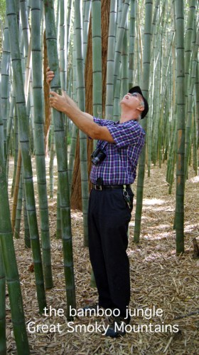 a bamboo forest in the TN hills