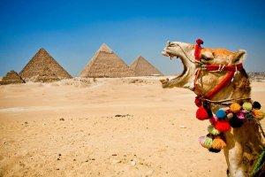 CamelBooYaaPyramids