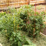 Tips for Winterizing Your Summer Garden via Tipsaholic