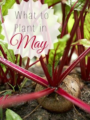 What to Plant in May | Tipsaholic.com #gardening #vegetables #planting #food #healthy