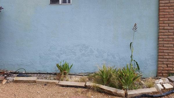 before stucco repair