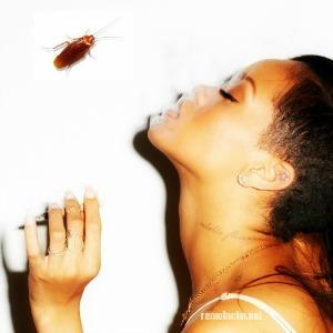 minicuca Rihanna tuitea sobre cucharachas en RD [Turismo]