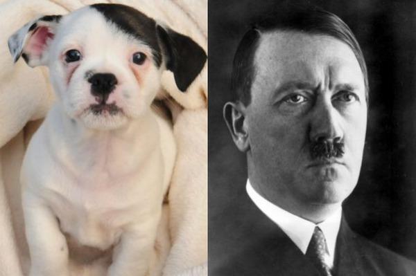 path El perro parecido a Hitler