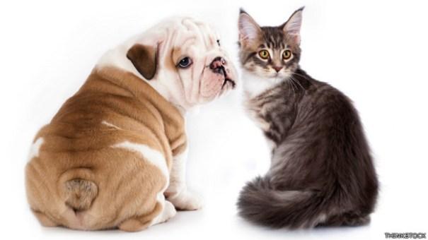 140331113212_pets_diseases_624x351_thinkstock