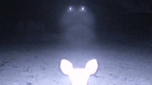 10169181 10151982863022644 1534527202 n ¿Podría esta misteriosa luz ser un Ovni?