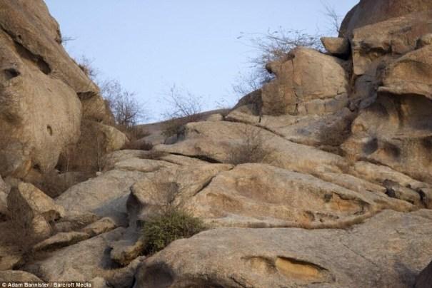 20140623 124542 45942409 ¿Podría usted encontrar el leopardo? [fotos]