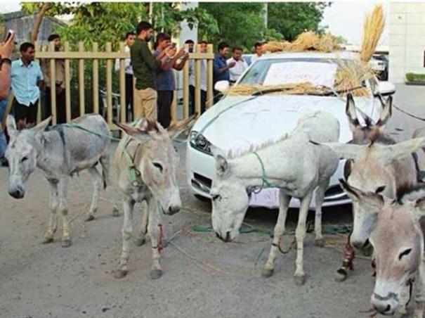 image50 Dueño de Jaguar de US$72 mil usa burros para moverlo