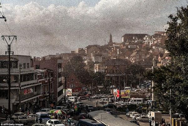 langostas Miles de millones de langostas invaden Madagascar