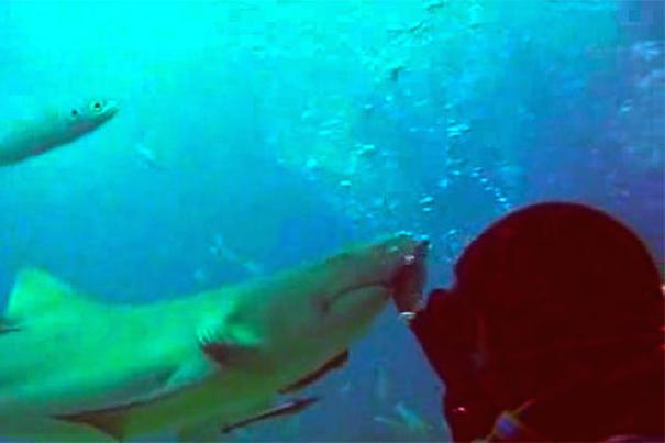 tiburon-perrito
