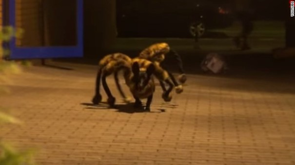 141208165034-spider-dog-youtube-story-top