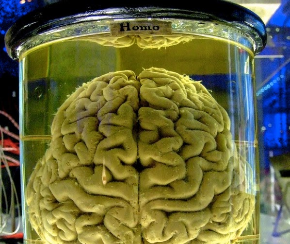 Brain-in-a-Jar-Brain-in-the-Vat-10-Mind-Blowing-Theories-That-Will-Change-Your-Perception-of-the-World