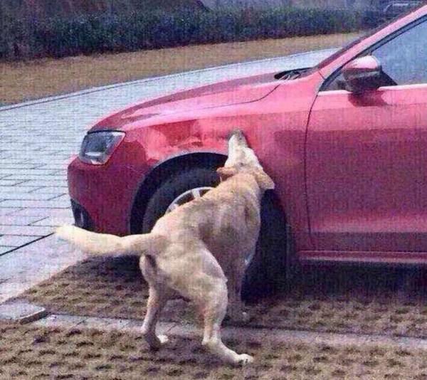 image179 Fotos   La venganza del perro quillao