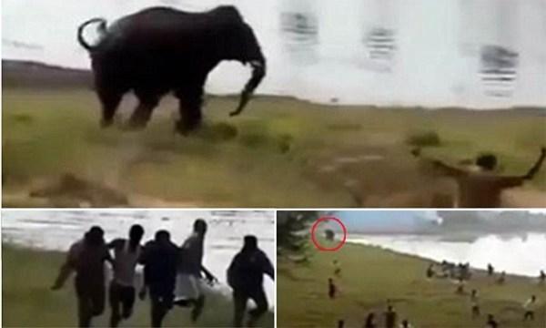 image416 Un elefante mató a un hombre en la India