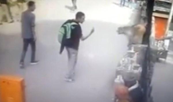 image588 Video   Mono se quilla cuando turista le saca el deo
