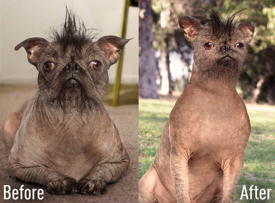 rs_560x415-150401083251-1024-before-after-pet-plastic-surgery