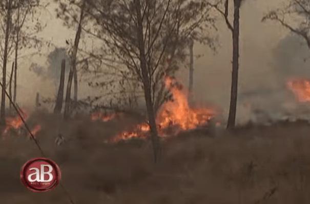 fuego Video   El picoteo tras el incendio forestal (RD)