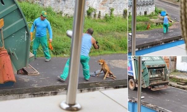 image7 Tipo despedido tras tirar perro herido en camión de la basura
