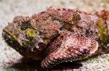pez piedra Los 10 animales más venenosos del mundo
