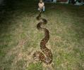 piton Atrapan pitón gigante en un parque de Florida
