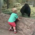 escondite-gorila