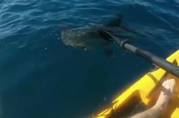 tiburon-kayak-remo