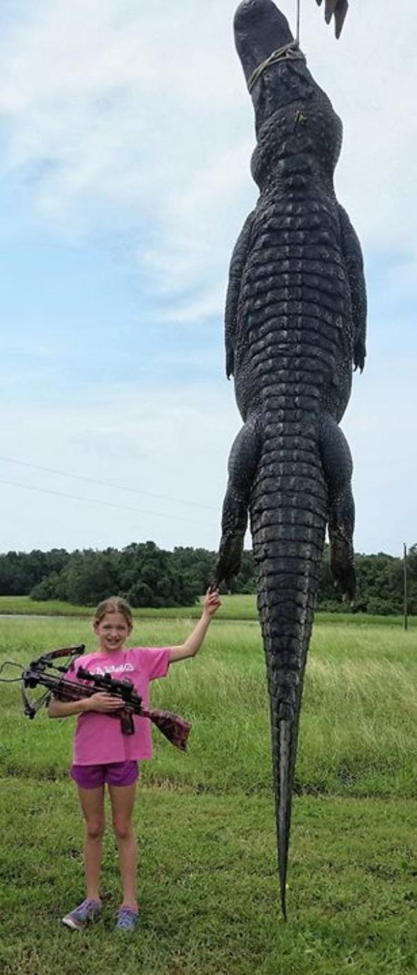 carajita mata caiman grandisimo en texas Carajita mata caimán grandísimo en Texas