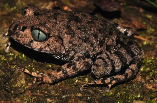 las-nuevas-especies-en-los-himalayas-fotos