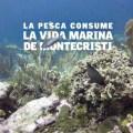 La sobrepesca en Montecristi