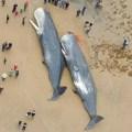 baradas Dos ballenas gigantes quedan varadas