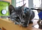 gato Ofrezcome! –20 mil dólares por 7 gatos desaparecidos