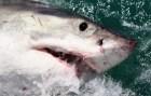 tiburon Tiburón arranca pedazo de muslo a surfista