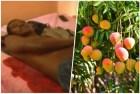 collage hombre mango Video   Pleito por un mango (Queseto!)