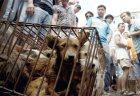 festival-chino-de-carne-de-perro