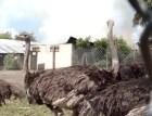 incendio-avestruces