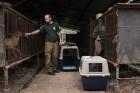 perros Rescatan 200 perros criados pa consumo humano