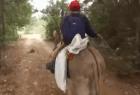 BurroMóvil