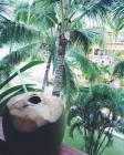 coco 5 pedazos de cielo en tierra dominicana