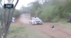 Perro Rally