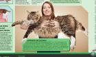 gato mas largo Video: Récord Guinness   El gato más larrrgo