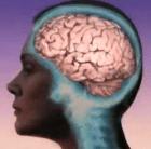 cerebro humano 5 preguntas para saber si el cerebro humano es en realidad tan especial