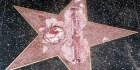 estrella-trump