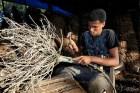 arbolitos charamicos Arbolitos de charamicos hacen daño a bosques RD