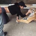 jeva La ex jeva dominicana de Bieber jugando con un tigre como si na