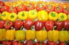 tomates RD y las exportaciones agropecuarias