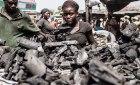 haiti carbon vegetal RD pierde parte de sus bosques por la quema de carbón