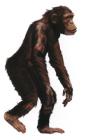 monito Un mono que vivió en la República Dominicana hace 15 millones de años