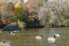 central park Hallan cadáver descompuesto en Central Park